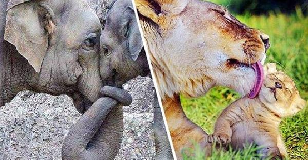 """โมเม้นท์ความประทับใจของสัตว์โลก ที่ยืนยันว่า """"ความรักของแม่"""" ยิ่งใหญ่ที่สุด"""