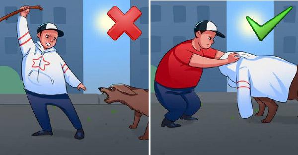 13 เคล็ดลับที่สามารถช่วยในสถานคับขัน เมื่อเผชิญหน้ากับสุนัขที่เข้ามาโจมตี