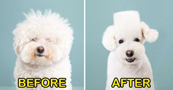 ภาพก่อน-หลังการกรูมมิ่งน้องหมา แต่ชาวเน็ตเถียงกันว่าแบบไหนดีกว่ากันแน่ (ภาพใหม่)