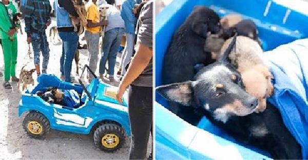 ครอบครัวยากจนใช้รถของเล่น พาแม่และลูกสุนัขมาหาหมอในเมือง