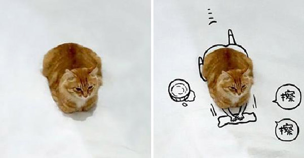 เมื่อภาพแมวธรรมดาๆถูกแต่งให้เจ๋งขึ้น งานนี้ชาวเนตจึงจัดให้อย่างสาสม
