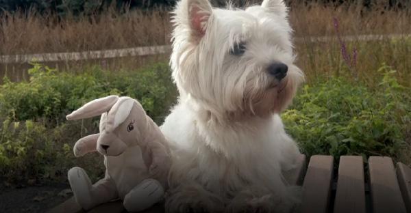 น้องหมาไม่กินไม่นอน เพราะตุ๊กตาตัวโปรดพัง และเลิกผลิตไปแล้ว เจ้าของจึงขอความช่วยเหลือจากชาวเน็ตทั่วโลก