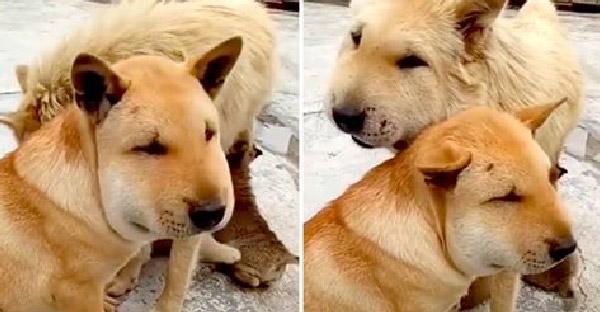 เจ้าของตามหาหมาทั้งบ้าน สุดท้ายมาเจอนั่งหน้าบวมเพราะซนเกินเหตุ