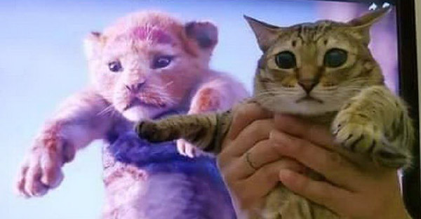 เมื่อทาสแมวอยากเลียนแบบซิมบ้าในเดอะไลอ้อนคิง จึงเกิดเป็นภาพฮาๆขึ้น