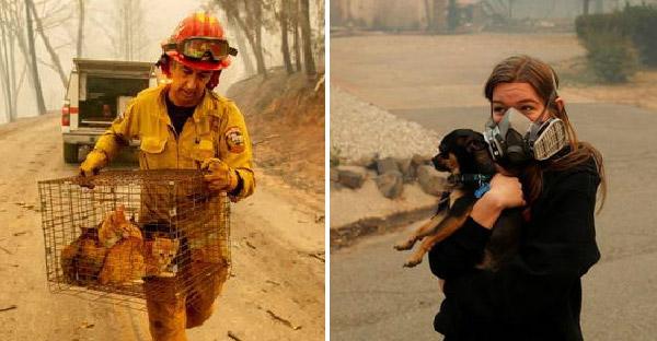 รวมภาพกู้ภัยช่วยเหลือสัตว์โลกจากเหตุการณ์ไฟป่าแคลิฟอร์เนีย ที่จะทำให้หลายคนน้ำตาซึม