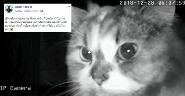 เจ้าของไปเที่ยวปีใหม่ แต่พอถึงสนามบินเปิดกล้องเช็คแมว ถึงกับอยากจะกลับบ้านทันที