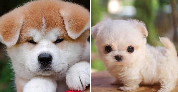 9 สุนัขพันธุ์น่ารักที่ทำให้หัวใจของเราสั่นสะเทือนได้เลย