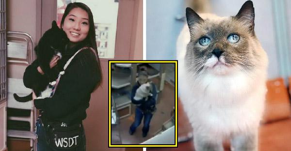 ผู้จัดการพบภาพวงจรปิดสุดน่ารัก ที่พบว่าพนักงานของเขากำลังเต้นกับแมวอย่างเป็นกันเอง