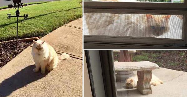 สาวซึมเศร้าหนักหลังสูญเสียแมวที่รัก แต่เหมียวข้างบ้านก็โผล่มาปลอบใจได้จังหวะพอดี