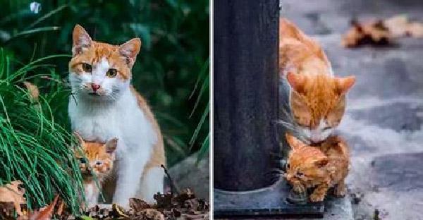 สาวนิรนามหยิบลูกแมวโยนลงน้ำ ก่อนที่ช่างถ่ายภาพจะเห็นเหตุการณ์และช่วยไว้ได้ทันเวลา
