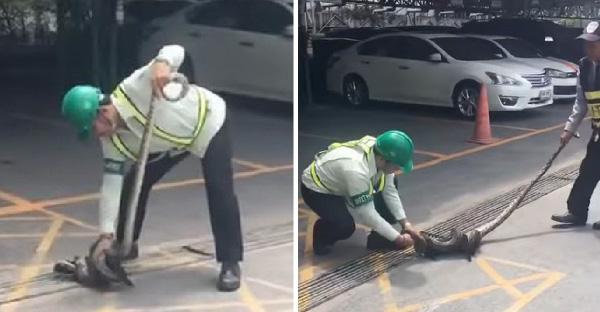 พลเมืองดีช่วยลูกแมวจากงูหลามรัด แต่ดันถูกลูกแมวกัดมือแทนซะได้