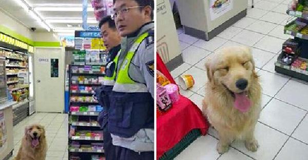 ตำรวจรับแจ้งมีการบุกรุกร้านสะดวกซื้อ พอไปถึงพบโจรสี่ขากระดิกหางใส่แถมนั่งยิ้มแป้น