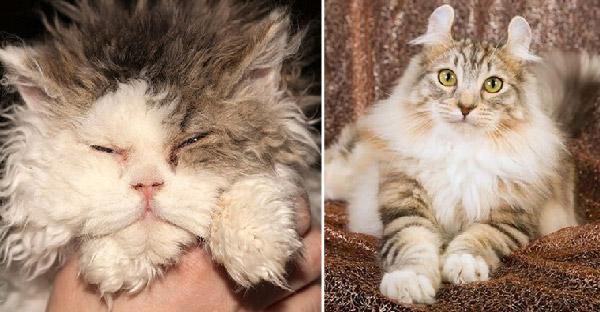 12 เรื่องน่ารู้เกี่ยวกับแมวหายากและเป็นที่นิยมจากทั่วโลก
