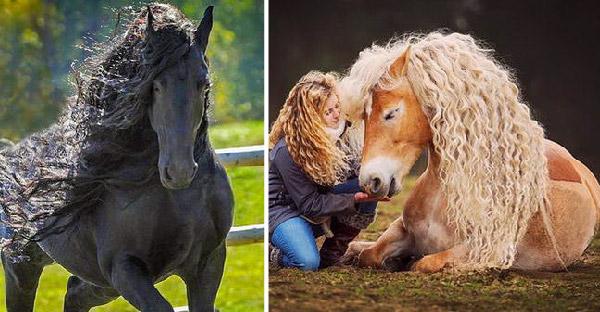 13 ความสง่างามของม้ายอดสายพันธุ์ ที่พิสูจน์ให้ความน่าทึ่งของธรรมชาติ