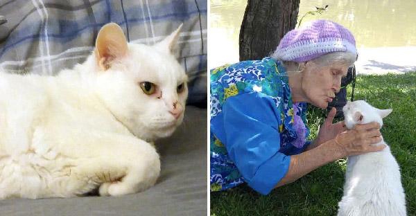แมวแก่ผูกมิตรกับคุณยายแปลกหน้าวัย 86 และพากันเล่นสนุกราวกับเป็นเด็กอีกครั้ง