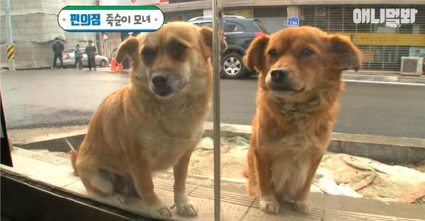 แม่หมาท้องแก่นั่งรอหน้าร้านสะดวกซื้อทุกวัน ด้วยเหตุผลที่ชวนน้ำตาซึม