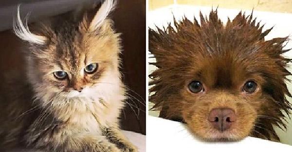 หมา-แมวลูกผสมที่สวยงามเหล่านี้ ทำผู้คนหลงเสน่ห์จนอยากเป็นเจ้าของ