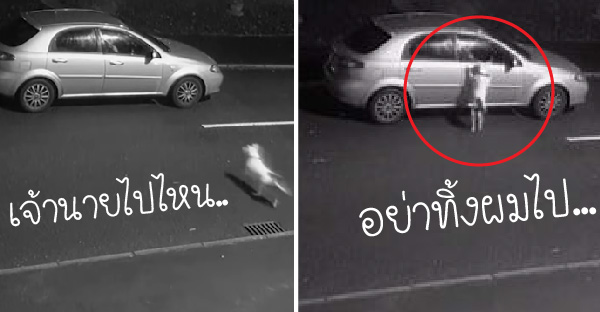 หมาน้อยวิ่งพล่านกระโดดไปรอบรถ หลังถูกทิ้งข้างถนนอย่างไร้เยื่อไย