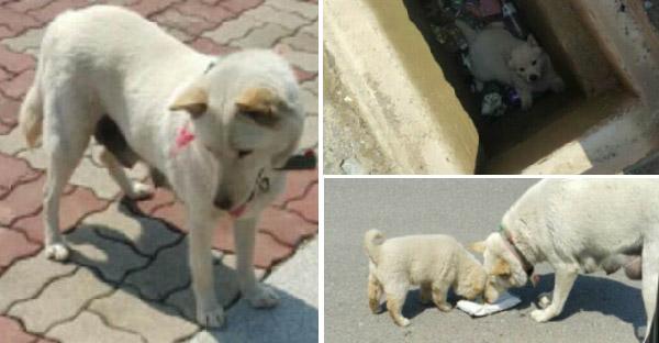 แม่หมาจรจัดนำทางคนแปลกหน้า ให้มาช่วยลูกตัวน้อยที่พลาดตกท่อระบายน้ำe