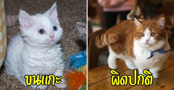 12 เรื่องน่าสนใจเกี่ยวกับแมวหายาก ที่หลายคนอาจไม่เคยรู้มาก่อน