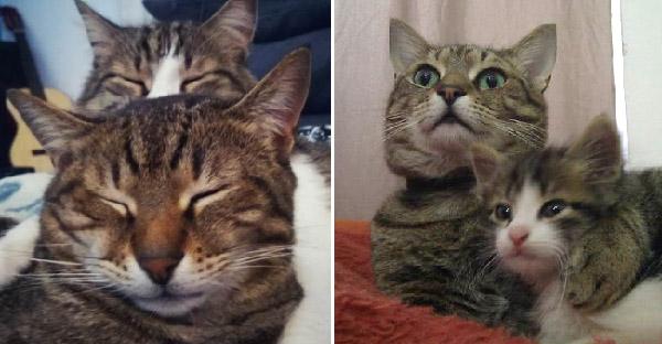 สลิดหนุ่มช่วยลูกแมวตัวน้อยจากลานจอดรถ และนางไม่เคยปล่อยให้น้องต้องเหงาอีกเลย