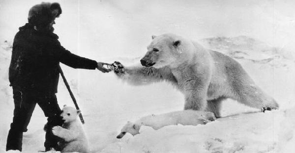 ทหารให้อาหารแม่และลูกหมีขั้วโลกที่หิวโซ จนทั้งคู่มารอเขาที่เดิมเป็นประจำ