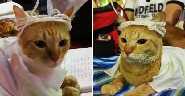 เมื่อทาสแมวต้องพาเจ้านายสวดมนต์ข้ามปี บุญกุศลแรงจนชาวเนตชอบใจกันยกใหญ่