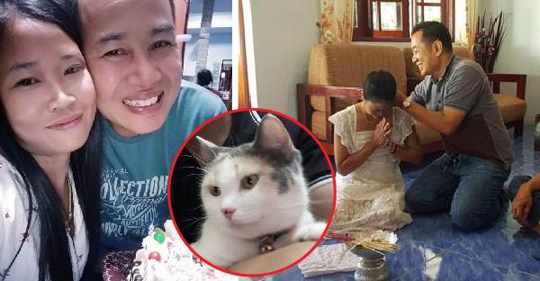 """หนุ่มสาวพบรักในกลุ่ม """"ชมรมคนรักแมว"""" ก่อนจะลงเอยด้วยงานแต่งงานในฝัน"""
