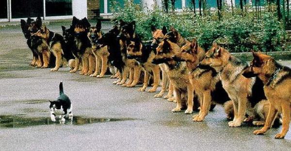 มัดรวมแมวเหมียวที่ทำตัวเป็นศูนย์กลางของจักรวาล และกฎทุกอย่างไม่สามารถใช้กับพวกมันได้