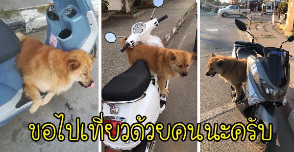 สาวโพสต์เจอหมาหลงปีนขึ้นรถมอไซค์ ก่อนจะรู้ว่าน้องชอบนั่งอ้อน ติดรถเที่ยวมาหลายคันแล้ว