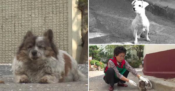 เจ้าของบอกให้ลูกหมานั่งรอแถวบ้านเก่า และน้องก็รอมาตลอด 10 ปี ขอแค่เพียงเจอเจ้าของอีกซักครั้ง