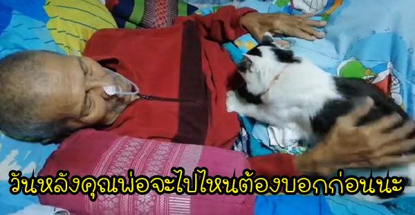 คุณพ่อไปอยู่รพ. 2 อาทิตย์ และเมื่อกลับถึงบ้าน แมวที่เก็บมาเลี้ยงก็มานวดไปร้องไป ราวกับคิดถึงแทบขาดใจ