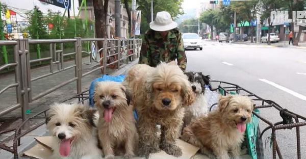 คุณลุงเก็บของเก่าดูแลหมาจรจัดเพียงคนเดียวนาน 8 ปี และในที่สุดความช่วยเหลือก็มาถึง