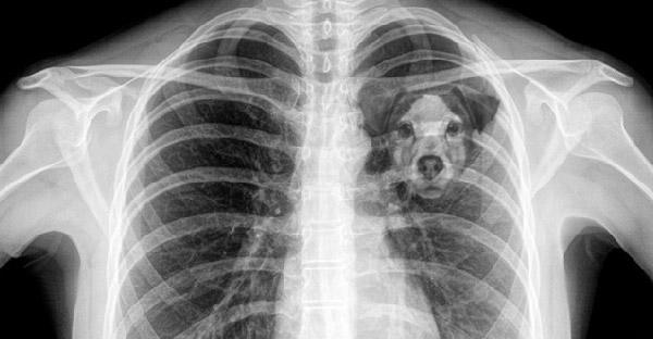 นักวิทย์เผยทำไมการสูญเสียสุนัข ถึงให้ความรู้สึกเหมือนการจากไปของคนรักมากที่สุด