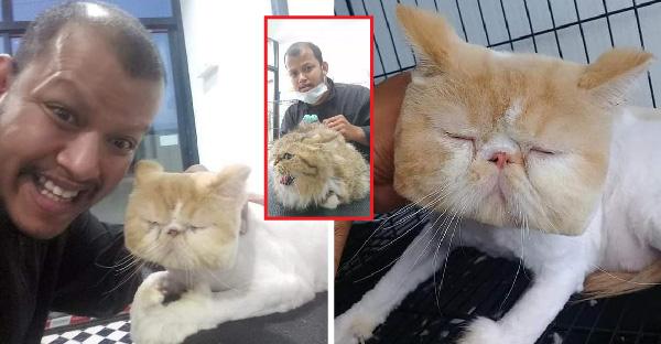 มัดรวมทรงหน้าแมวสไตล์ช่างท๊อป ช่างตัดขนที่กำลังโด่งดังในขณะนี้