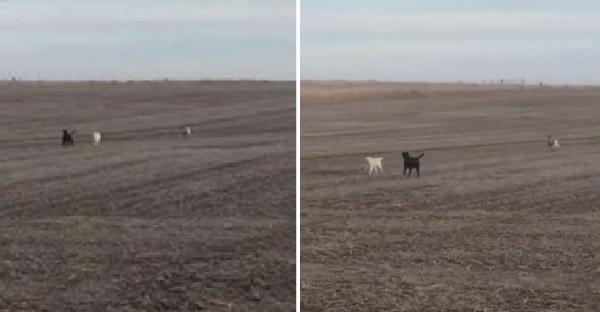 เจ้าของออกตามหาหมาที่หายไปในทุ่งร้าง และพบว่ามันไม่ได้อยู่เพียงลำพัง