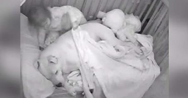 สาวน้อยชวนพิทบูลเข้านอนด้วยกัน เพราะความกลัว หลังจากเกิดแผ่นดินไหวครั้งใหญ่