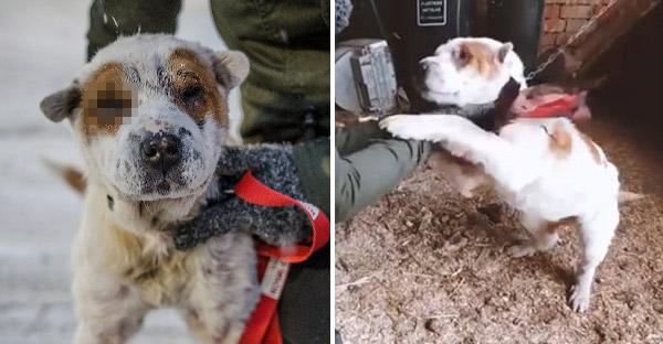 กู้ภัยเข้าช่วยเหลือหมาตาเดียวที่โดนล่ามมาทั้งชีวิต น้องกระดิกหางดีใจไม่หยุดที่ได้เจอทันที