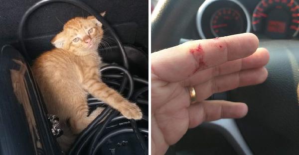 """หนุ่มเจอ """"ลูกแมว"""" สามตัวใต้ท้องรถบนทางด่วน เขารีบลงไปช่วยก่อนที่ทุกอย่างจะสายเกินไป"""