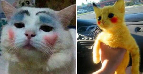 มัดรวมน้องแมวถูกแต่งหน้า จะดูฮามากน้อยแค่ไหนกัน