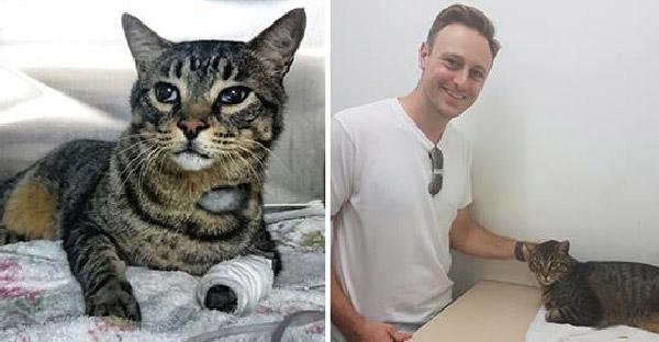 เจ้าของเจอแมวที่หายไป 11 ปี แต่เขาก็ตัดสินใจยกให้คนอื่นที่ดูแลมา 2 ปีหลังดีกว่า