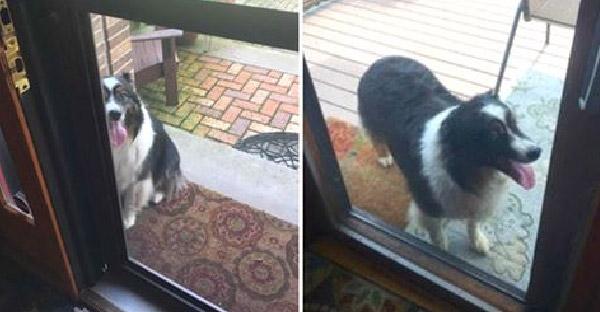 หลังย้ายเข้าบ้านหลังใหม่ เขาก็พบเจ้าตูบปริศนา ก่อนจะรู้ว่ามันมาไกลเพื่อหมาบ้านเขา