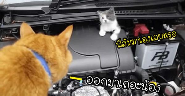 ลูกแมวติดเครื่องยนต์อยู่นาน หลอกล่อไม่ออกมาซักที จนต้องให้พี่ส้มมาช่วยเจรจาให้