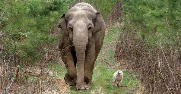 น้องหมากับช้างเป็นเพื่อนเล่นกันนานกว่า 8 ปี ก่อนจะต้องจากกันเพราะเรื่องร้ายๆ
