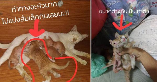 แม่แมวคาบลูกแมวส้มตัวโตปริศนาเข้าบ้าน และเอามาเลี้ยงรวมกับลูกตัวเองหน้าตาเฉย