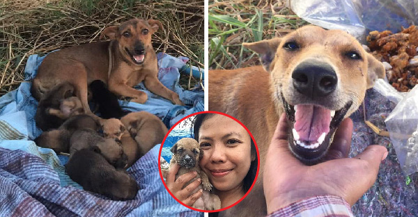 """แม่หมาถูกทิ้งข้างทางพร้อมลูกๆ """"ยิ้มขอบคุณ"""" สาวใจดี ที่ช่วยชีวิตและสร้างที่พักให้อย่างดี"""
