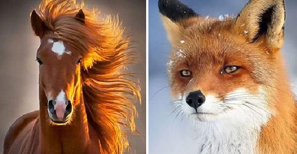 """19 สัตว์โลกรูปงามราวกับ """"ซุปเปอร์โมเดล"""" มาเอง"""