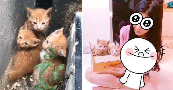 สาวพบลูกแมว 3 ตัวกอดกันไม่ห่าง ก่อนจะเจออีก 2 ตัว กว่าจะช่วยได้ลุ้นกันข้ามวันข้ามคืน
