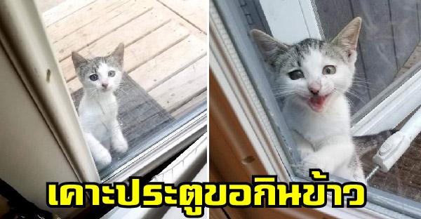ลูกแมวจรจัดหลงทางกับพี่น้อง เดินมาเคาะประตูขอข้าวกินจากทาสทุกวัน จนหลงรักรับมาเลี้ยงดูอย่างดี