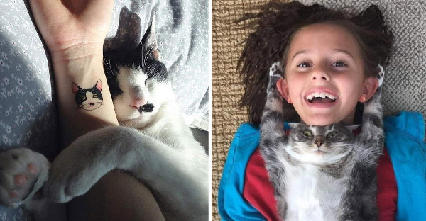 มัดรวมภาพความอบอุ่นที่ยืนยันว่าแมวเป็นสัตว์เลี้ยงแสนรักของมนุษย์เสมอ